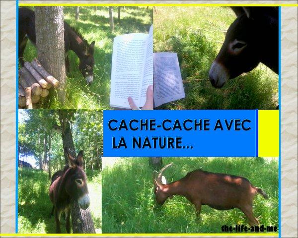 Cache-cache avec la nature !