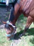 Photo de Horse----x3