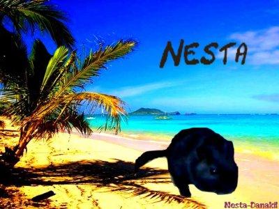 Nεstα α ℓα ρlαgє