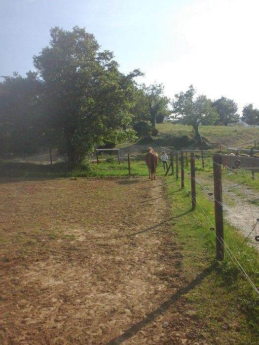 mon paddock