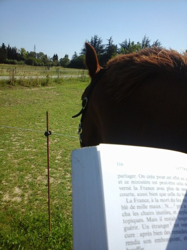 Lecture poney