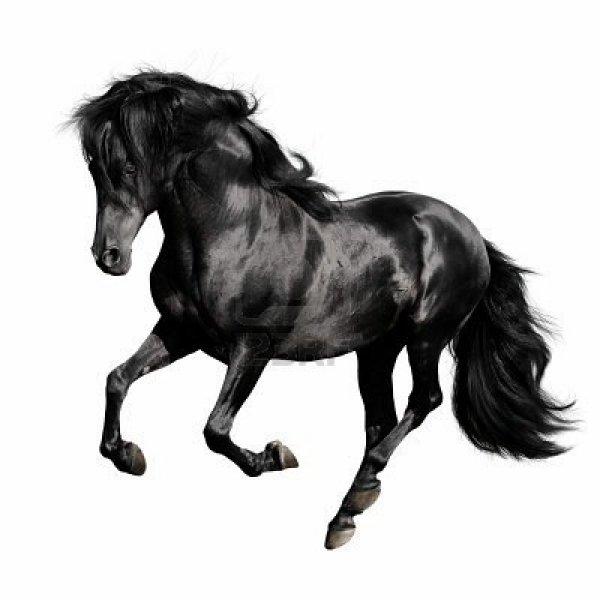 thunder mon cheval
