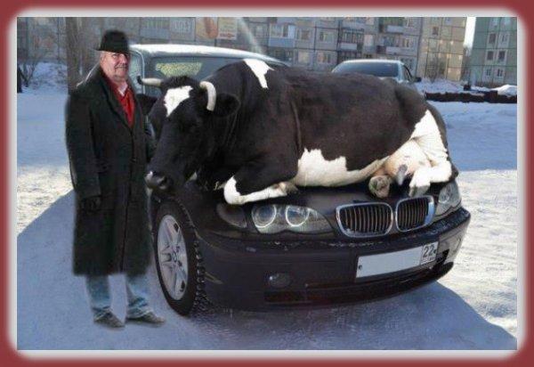 Ah la vache belle voiture