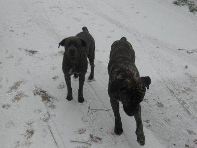 Eros et Engy sous la neige le 30/11/2010