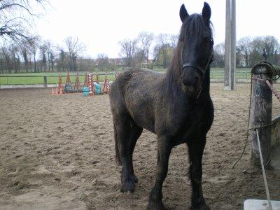 Comment passer de cheval noir (et propore !) à cheval marron ?