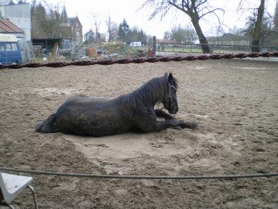 Laissez moi vous donner une leçon de roulade dans le sable humide (comme ça ça colle bien)...