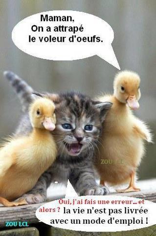 !!!IL NOUS CHOISIT NOTRE HERITAGE, LA GLOIRE DE JACOB QU IL AIME!!!Psaumes.47.4. un tel heritage personne ne peut vous le derober car c est Dieu qui en est le gardien!!