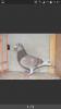 Mon dernier venu au pigeonnier
