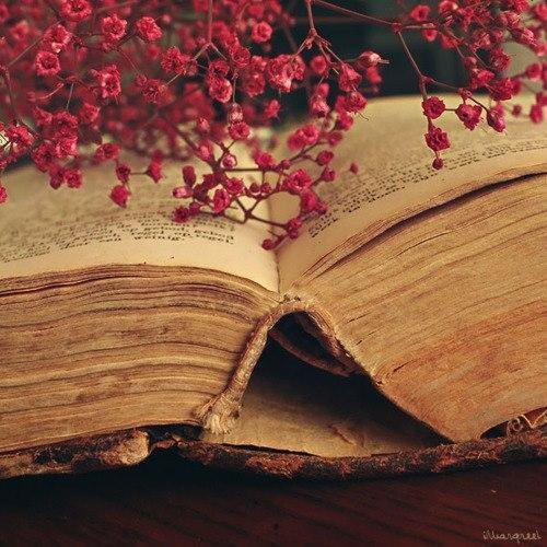 «Books are for people who wish they were somewhere else.»