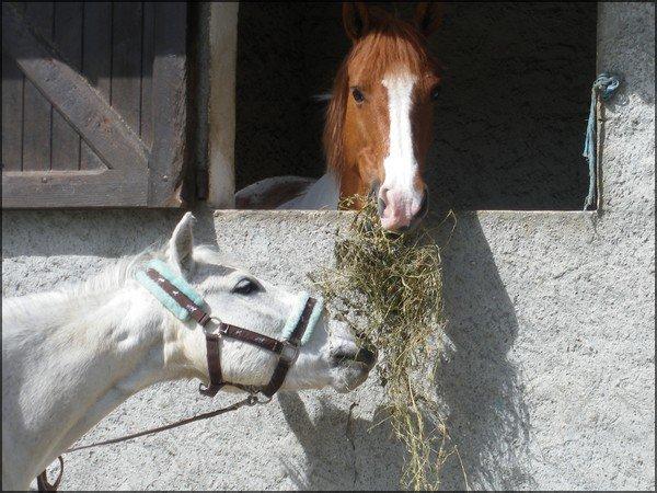 La raison qui redonne sens à mon existence, les chevaux <3