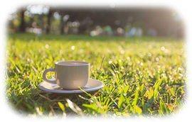 Café, matin, jardin