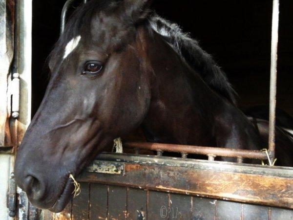 Ce cheval est trop beau. ❤