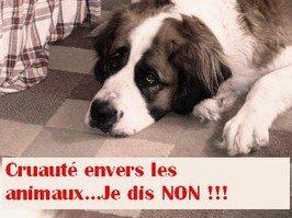 IL EST PROUVE , QUE TOUT HUMAIN S'ATTAQUANT AINSI AUX ANIMAUX , S'EN PRENDRA  , UN JOUR OU L'AUTRE ,  AUX HUMAINS !!!!