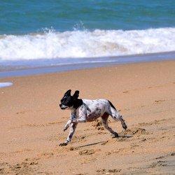 Les plages autorisees aux chiens en 2012 blog de for Hotels qui acceptent les chiens