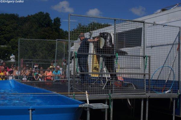 Suite du reportage sur le Salon Animalier de Saint Tricat-2016