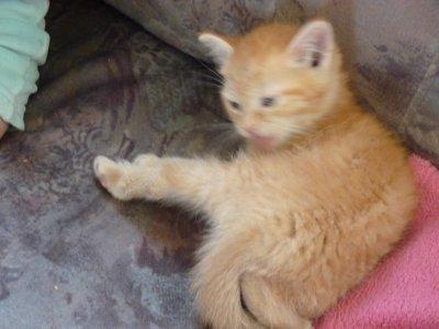 la nouvelle petite chatte de ma fille