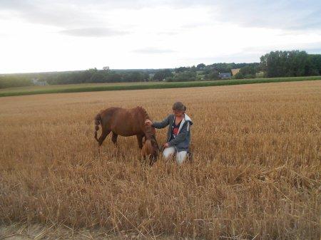 broutage dans un champs de blé d'or ^^