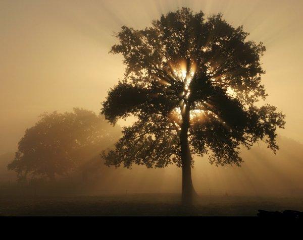 Seul l'arbre qui a subi les assauts du vent est vraiment vigoureux, car c'est dans cette lutte que ses racines, mises à l'épreuve, se fortifient.
