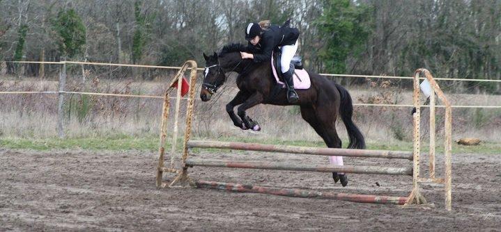 « Le cheval enseigne à l'homme la maîtrise de soi, et la faculté de s'introduire dans les pensées et les sensations d'un autre être vivant. »