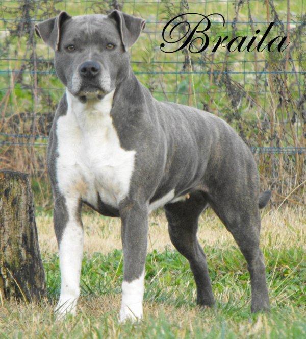 Braila 7 ans Bientôt ;)