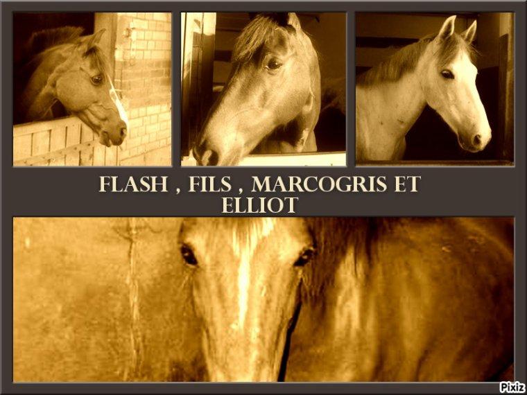 Flash , Fils , Marcogris et bien sur Elliot