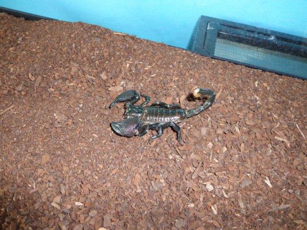 mon scorpion