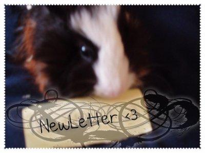 NewLetter
