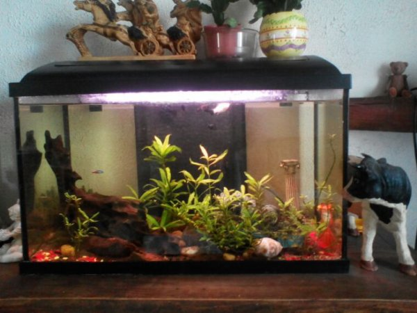 Petite photo de l aquarium pour Isa