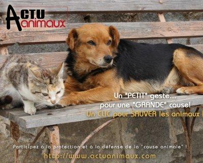 Actu animaux petitions venez nous aidez!!!!