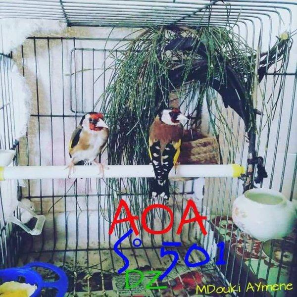 Mon Couple Chardonneret prava 2017 AOA