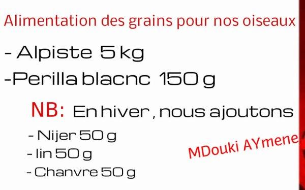 Alimentation des grains pour nos oiseaux Mdouki Aymene