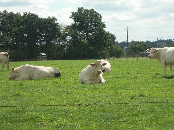 des vaches !!!!!!! (lol)