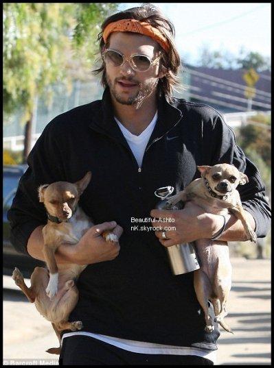 * * *  09 . 03 . 2011 -  Ashton Kutcher a troqué son look épuré pour une ambiance hippie lors d'une randonnée à Los Angeles hier. Le bel acteur portait un bandeau pour retenir ses cheveux, des lunettes de soleil rondes et une barbe touffue pour la visite de Runyon Canyon à Los Angeles. Il a été rejoint par plusieurs petits chiens qu'il portait dans ses bras et à son échelon fille Rumer Willis, 22 ans, qui a également eu un chiot à la remorque.         * * *