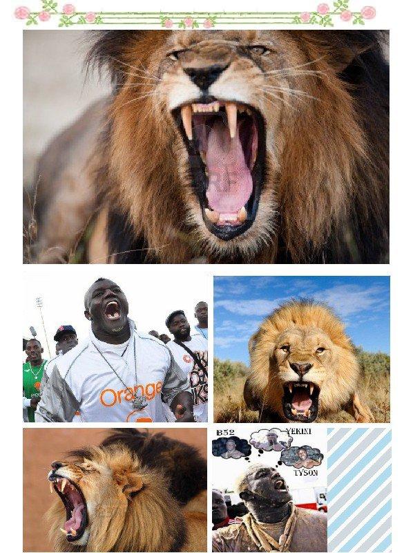 LE VRAI LION