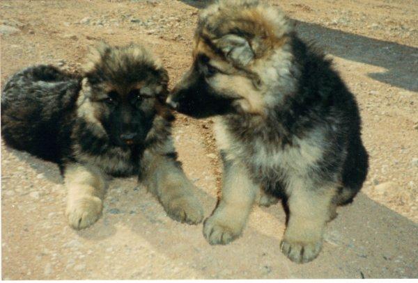 jiro et son frère