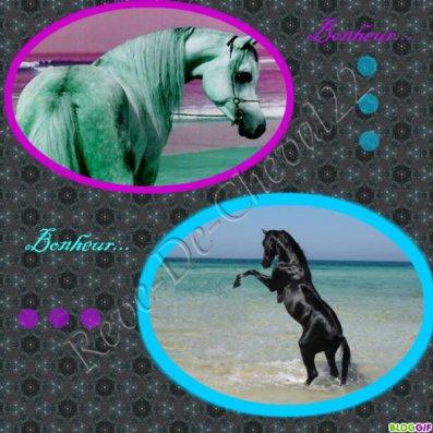 Concour photo : pour mon-poney-préférer !!!