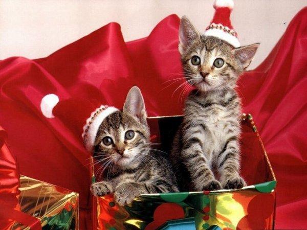 ..-**-..-**-..Joyeuse fêtes a vous tous  ..-**-..-**-..