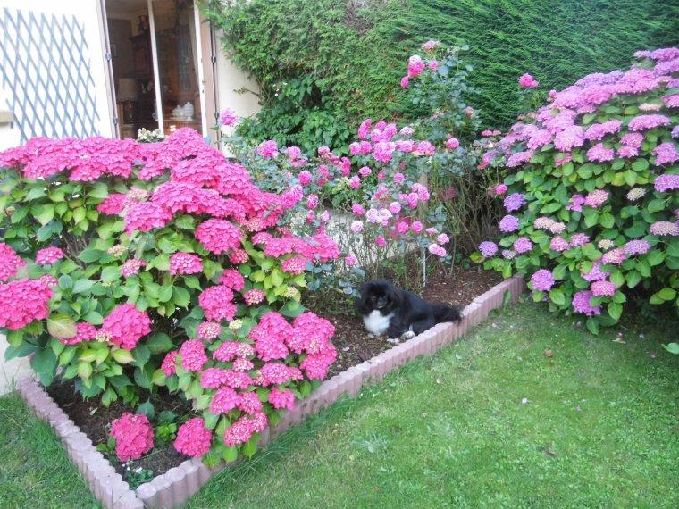 voila quelques photos de mon jardin
