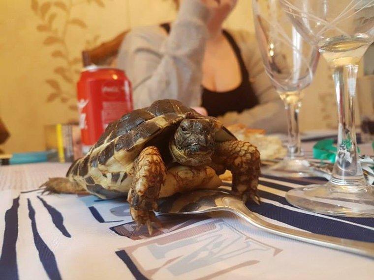 notre tortue <reglisse>