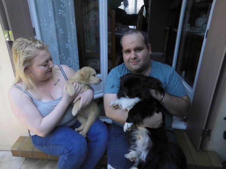 voila lipton qui fait connaissance de marlon le chien de mon fils stevens