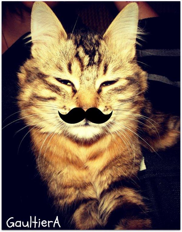 Monsieur le chat de mon chéri . :3