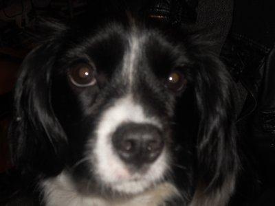 Paf ma chienne que j aime de tout mon coeur <3