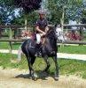 Poney--Sauvaage