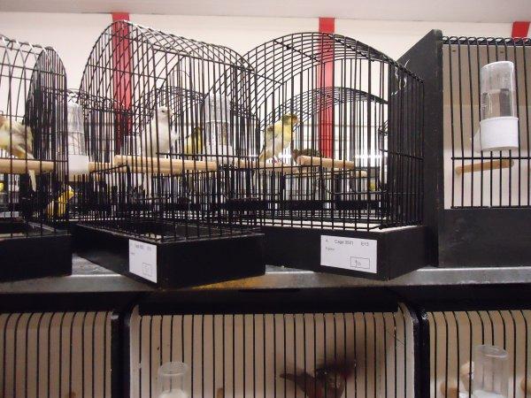 mais oiseaux en expo le 22- 23-24-25 novenbre 2012