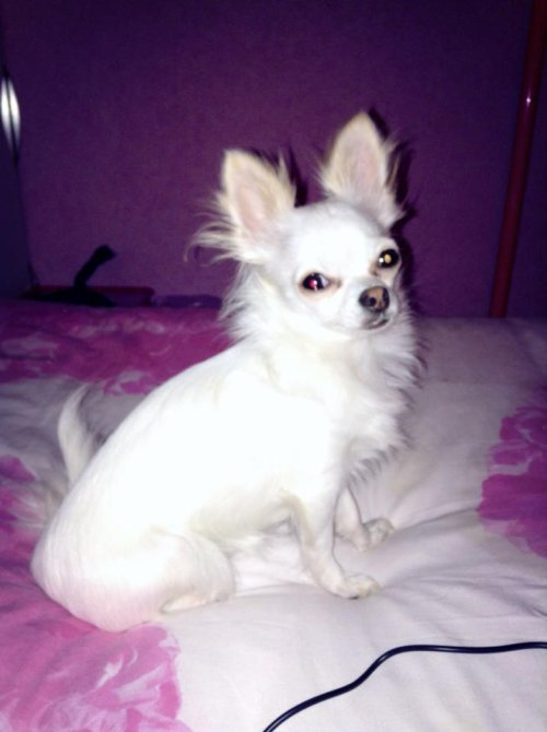 Ma petite Princesse ♥♥