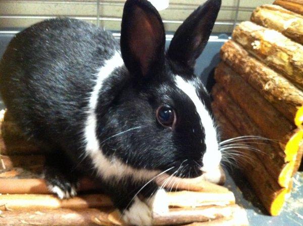 Mon lapin : Scarface <3