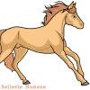 Sellerie-Nonoxe