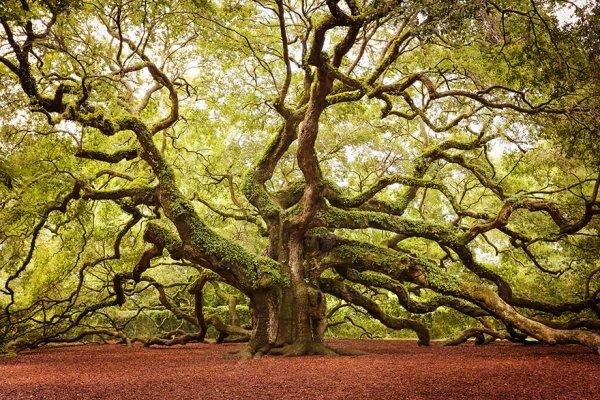 Résultats de recherche d'images pour «arbres magnifiques»