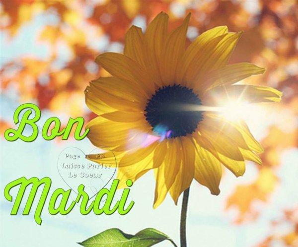 BON MARDI...