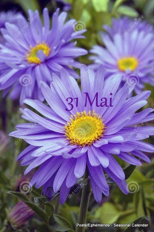 MERCREDI 31 MAI...